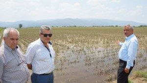 Aydın çiftçisinin zararı 30 bin dönüm alanda 40 milyon lira