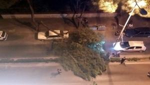 Aydın'da çam büyük çam ağacı otomobil üstüne devrildi