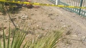 Aydın'da vahşi cinayet