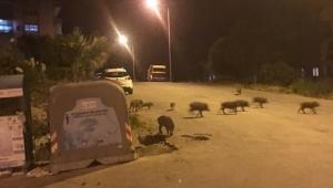 Kuşadası'nda hayvanseverlerden afiş tepkisi