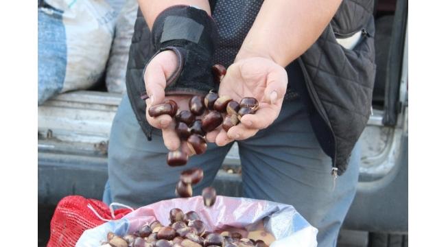 Türkiye'nin kestane pazarı Düzce'de kuruluyor