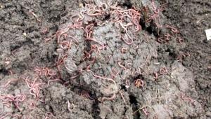Zeytin karasuyu organik tarımda kullanılabilir
