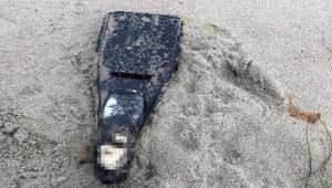 Kuşadası'nda palet içerisinde ceset parçası bulundu