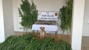 Aydın'da bir haftada 2 bin 766 gram uyuşturucu ele geçirildi